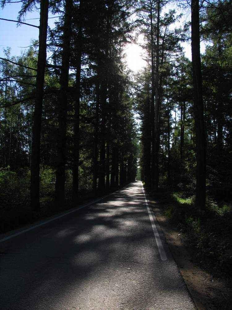 Старое правительственное шоссе