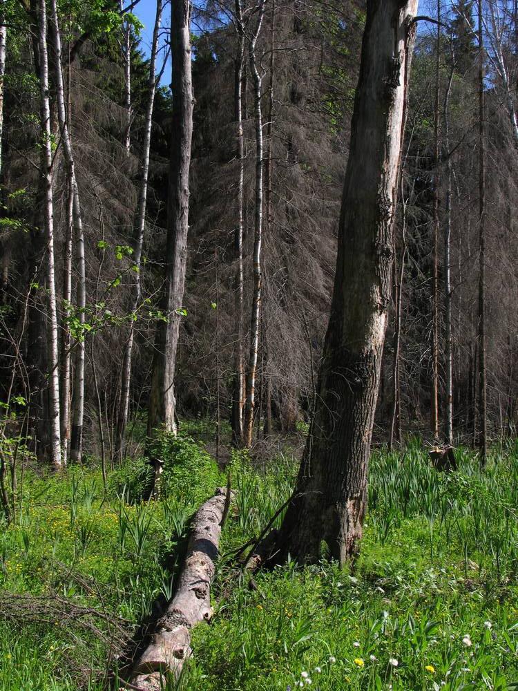 Ранней весной лес еще не весь укрылся зеленью
