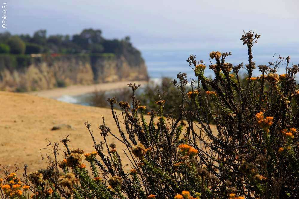 Желтые цветы на тихоокеанском побережье