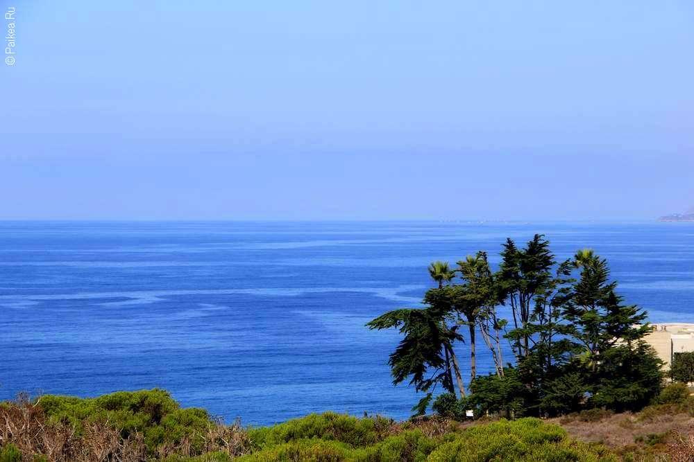 Пальмы и Тихий океан