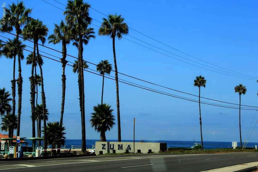 Пальмы у дороги