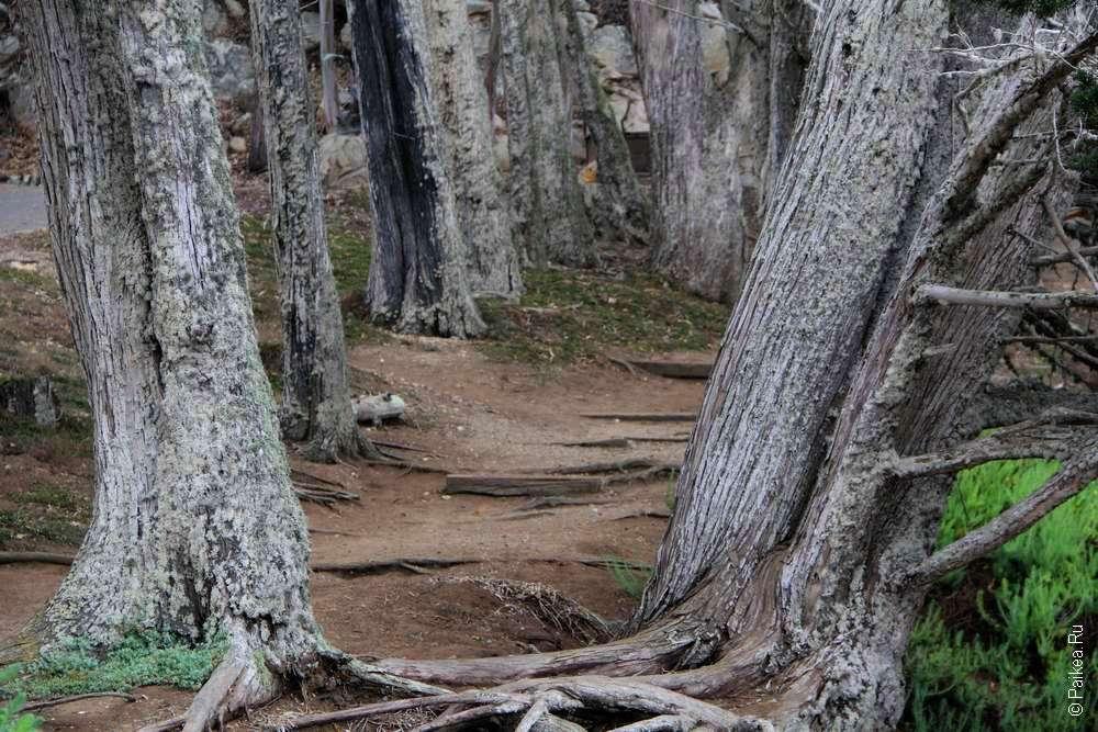 Тропа и корни деревьев