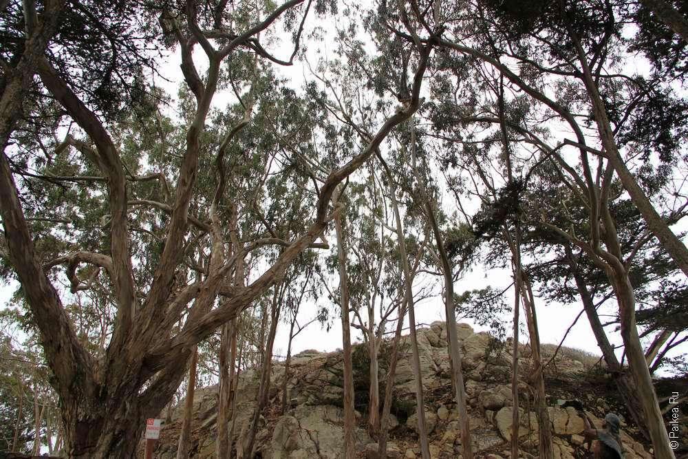 Вершина холма за деревьями
