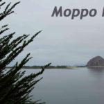 Ветви кипариса и скала Морро Рок