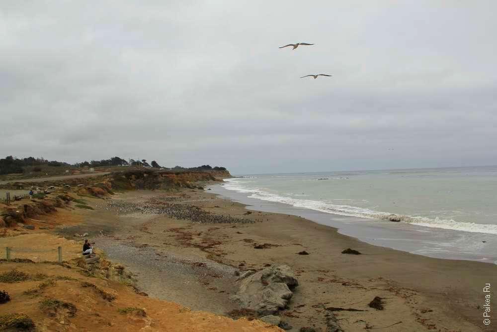 Пляж Сан-Симеон в Калифорнии