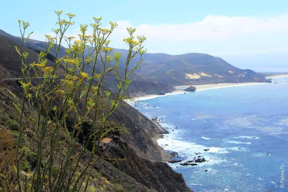 Цветы и океан