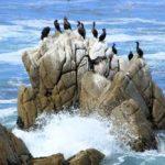 Скала на побережье Калифорнии