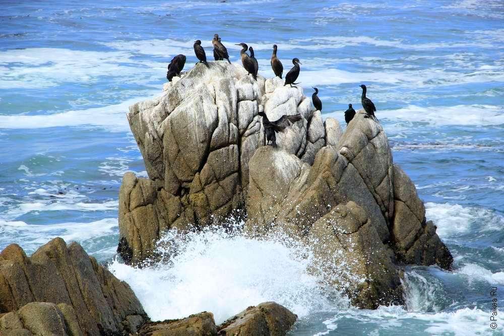 Скала и птицы в Пасифик Гроув