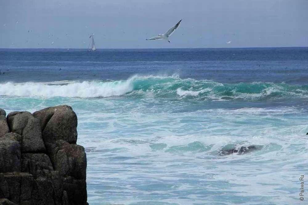 Чайка в небе над океаном