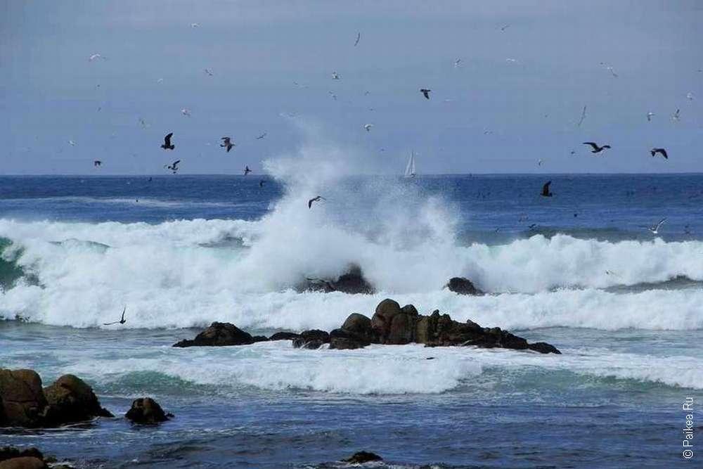 Волны и птицы
