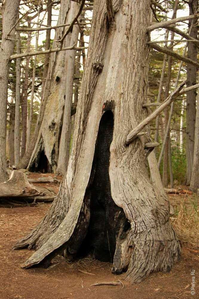 В кипарисовом лесу