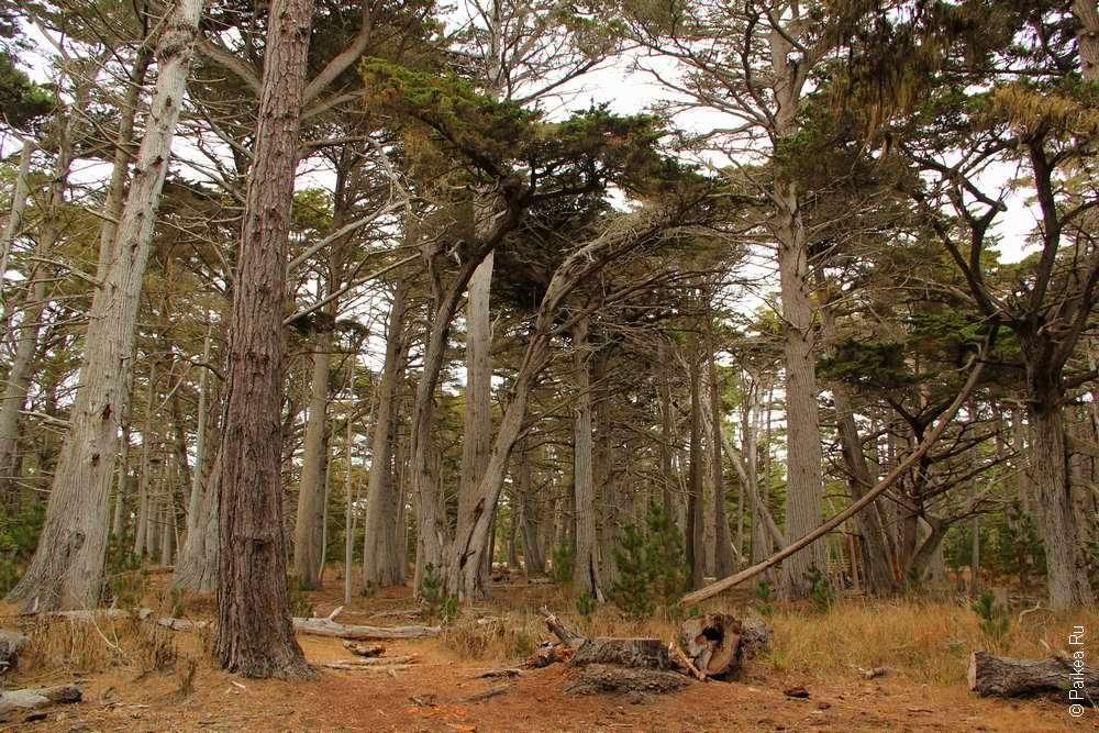 17-мильная дорога - Калифорнийские кипарисы