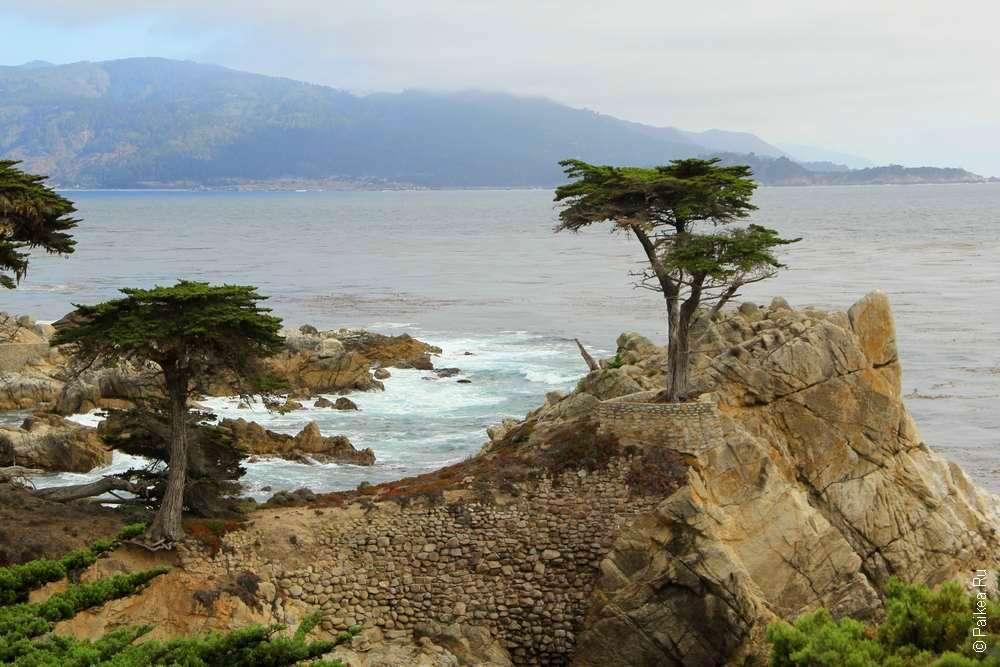 Кипарис на скале на фоне океана
