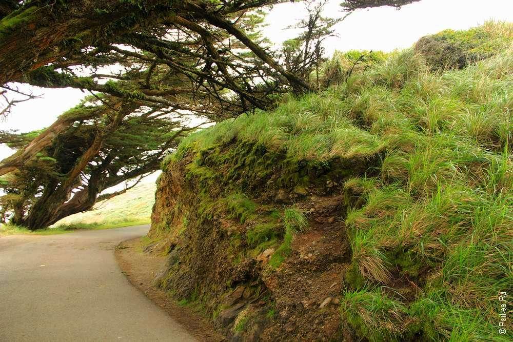 Дорожка у холма и кривые деревья