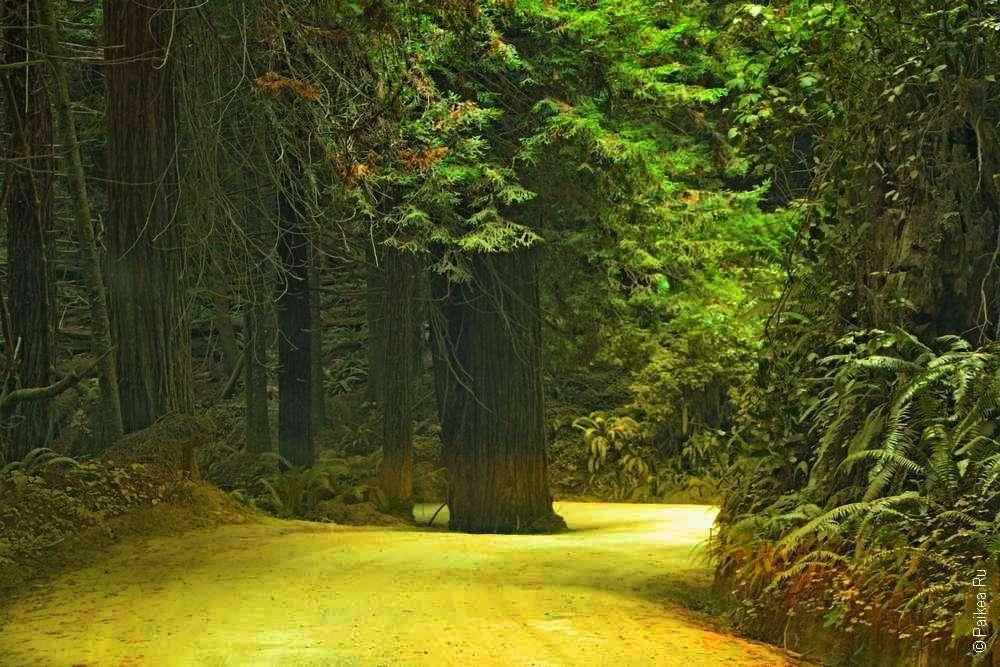 Грунтовая дорога по лесу