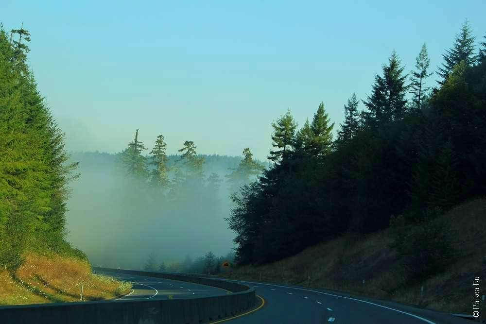 Дорога и деревья в тумане в Северной Калифорнии