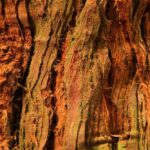 Редвуд (Redwood)