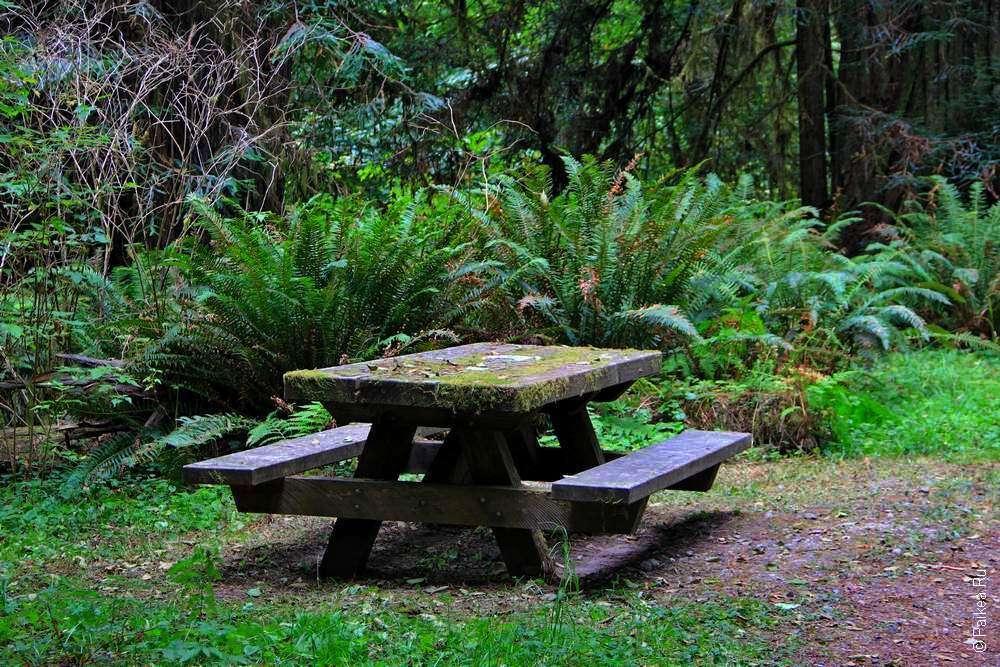 Деревянный стол в лесу