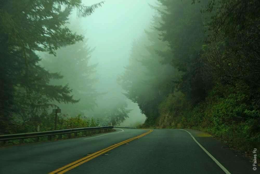 туманная дорога в парке редвуд