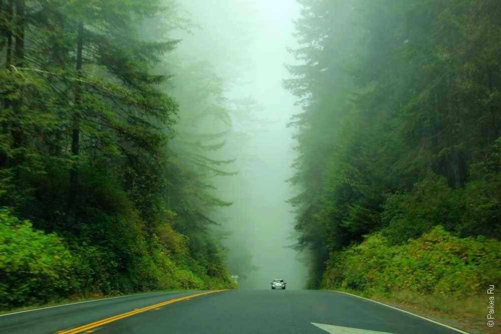 Дорога по лесу в тумане