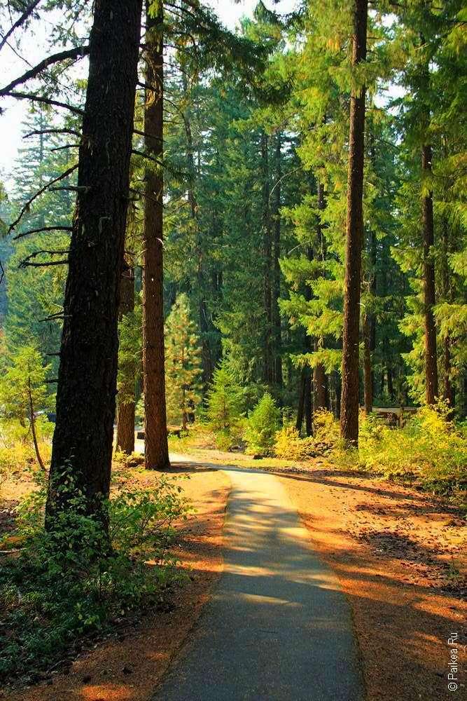 Тропинка вдоль деревьев