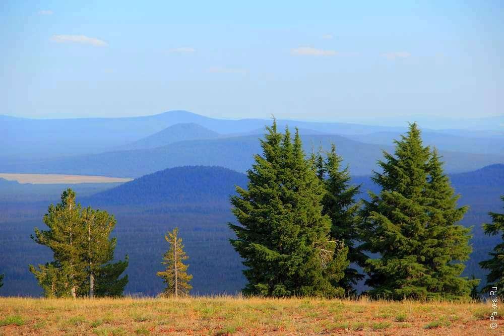 Деревья на фоне гор
