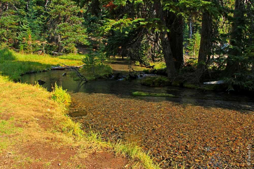 Мелкий ручей в лесу