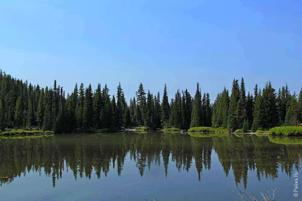 Лес на берегу озера