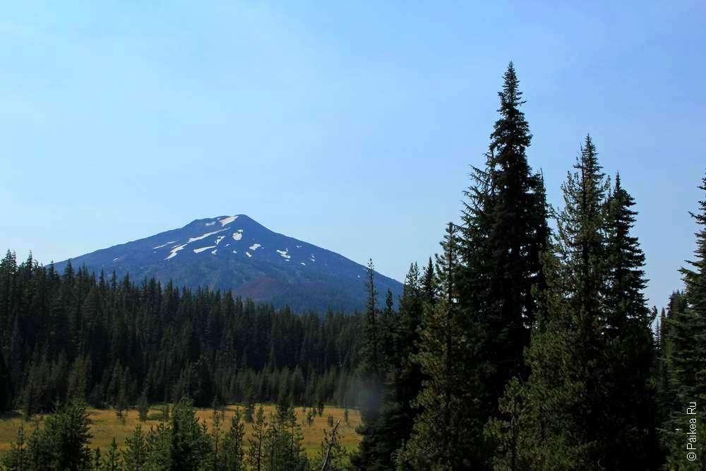 Деревья и гора Бачелор