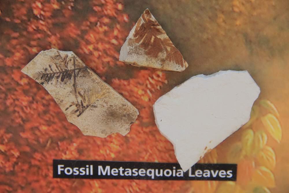 Окаменелости в парке John Day Fossil Beds