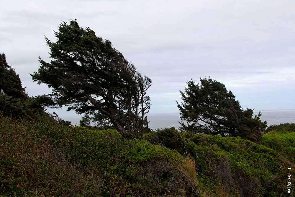 Деревья прогнулись от сильного ветра