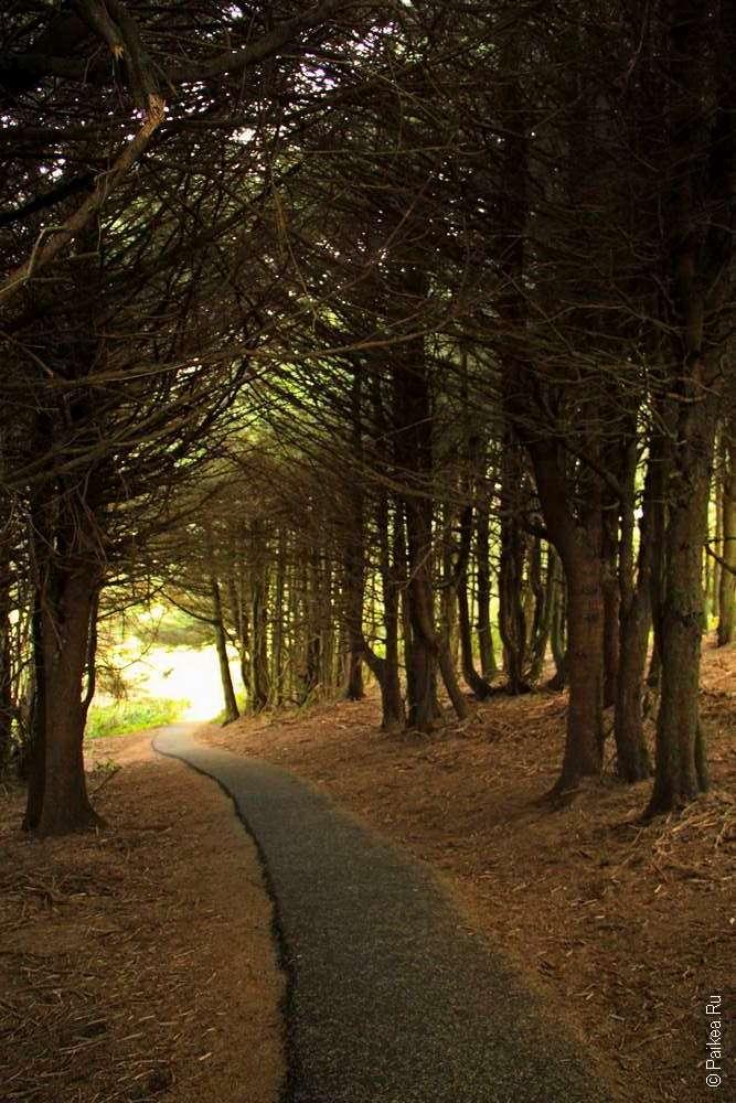 Дорожка между деревьями