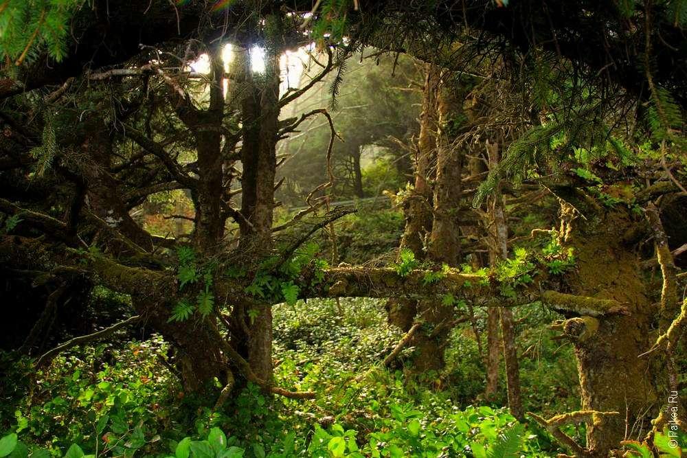 Солнечный луч в чаще леса