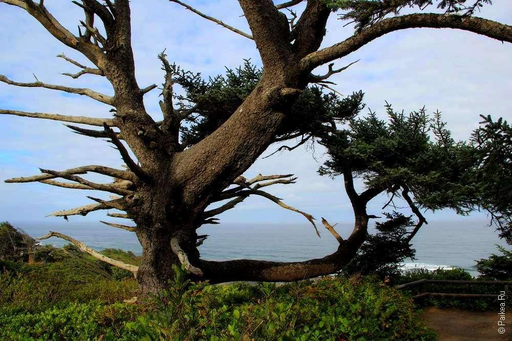 Скрюченное дерево