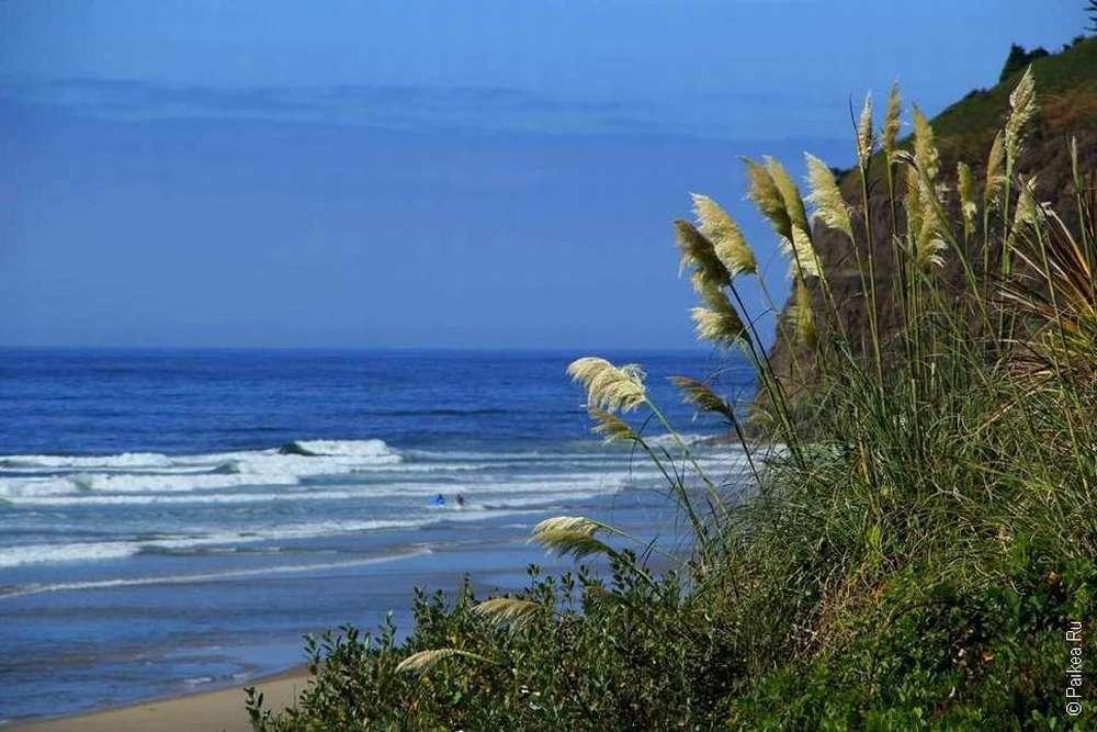 Трава у океана