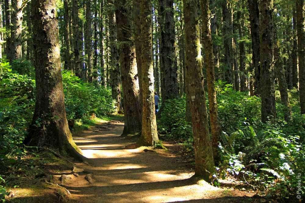 Тропинка между деревьями