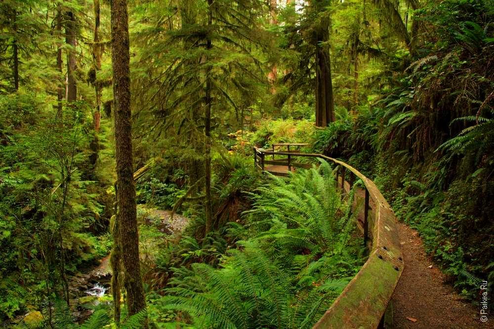 Вечнозеленый штат Вашингтон