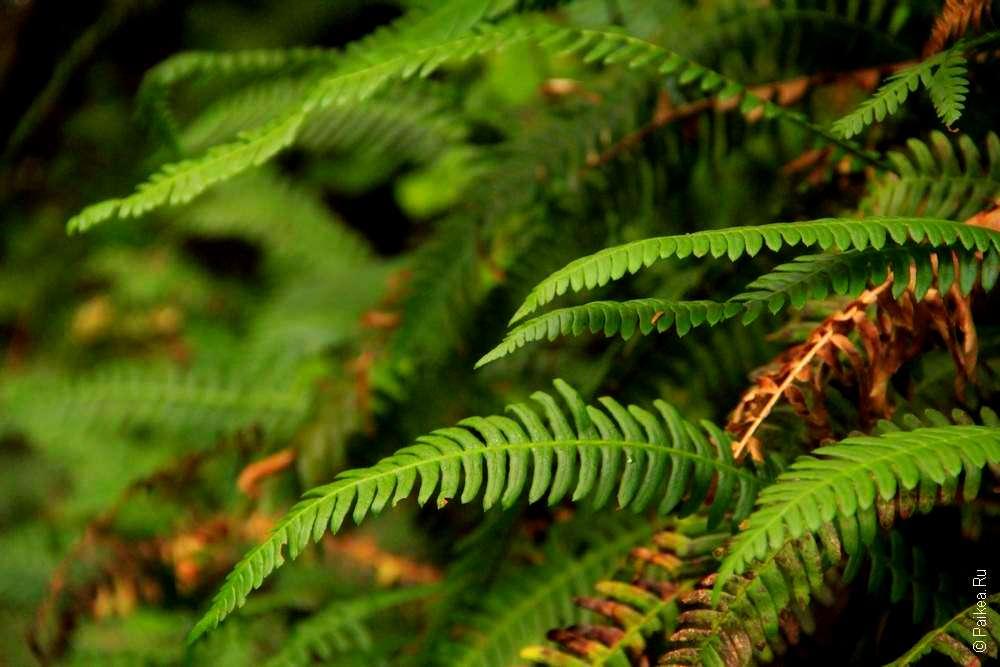 Зеленые листья в лесу