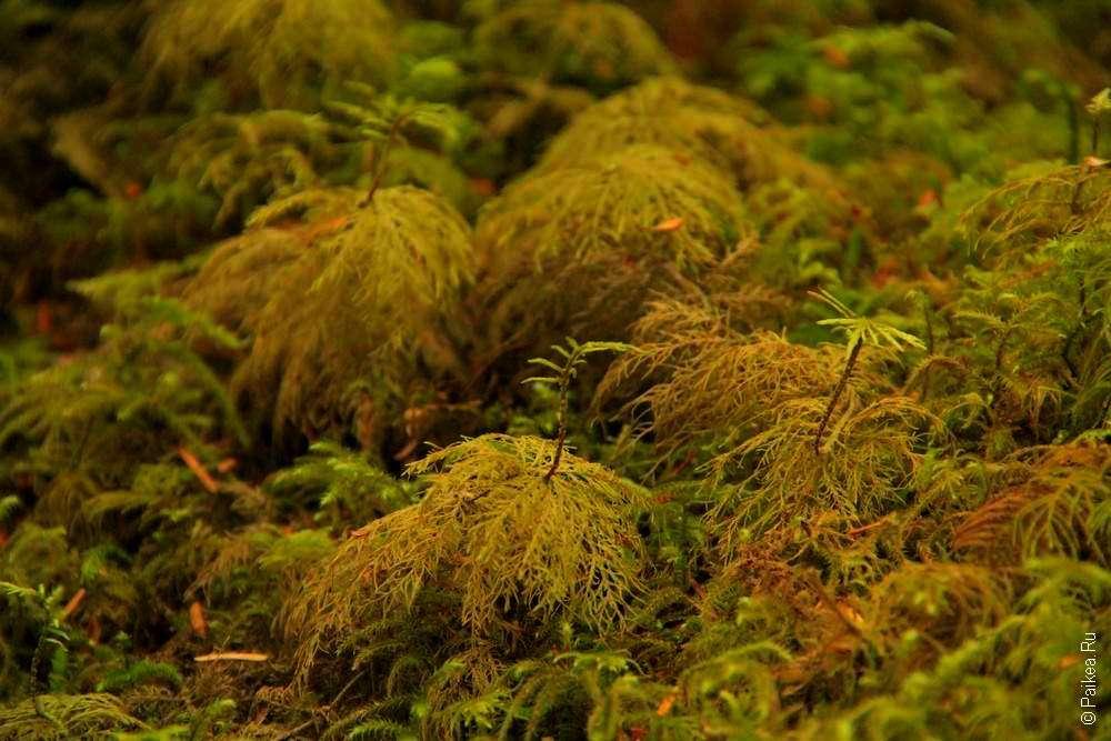 Лесная растительность