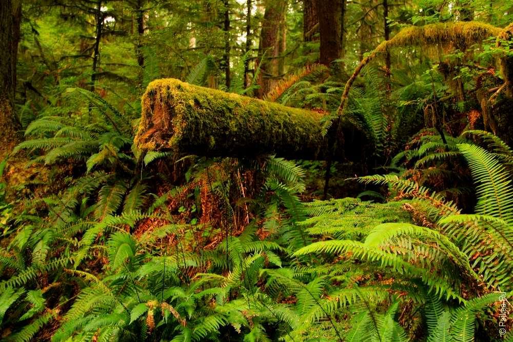 Сломанный ствол дерева