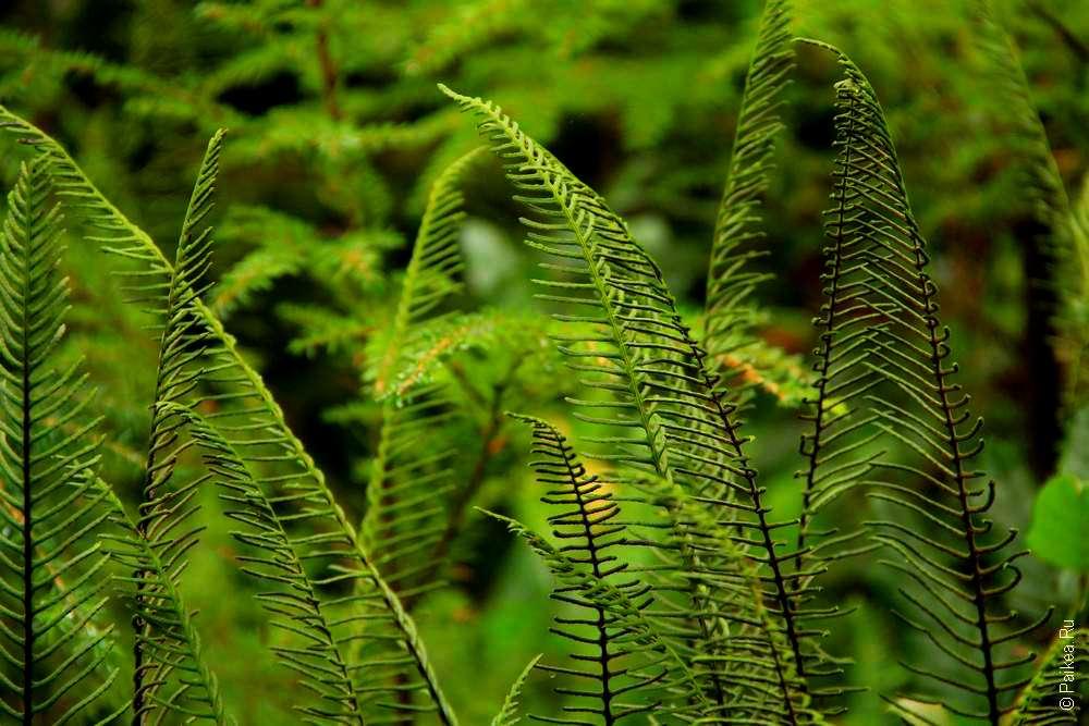 растения в rain forest