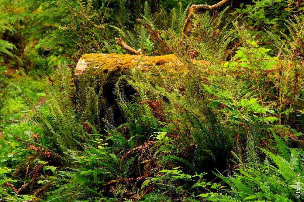 Поваленный ствол дерева