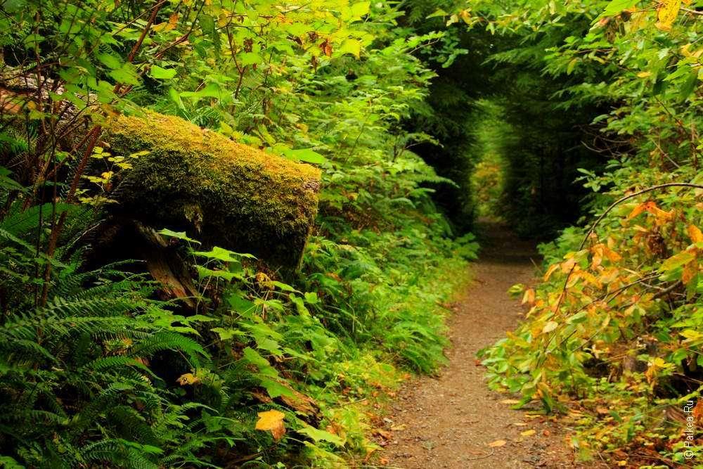 Лесной туннель