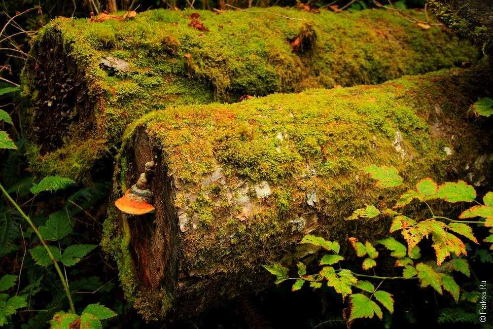 На дереве выросли грибы