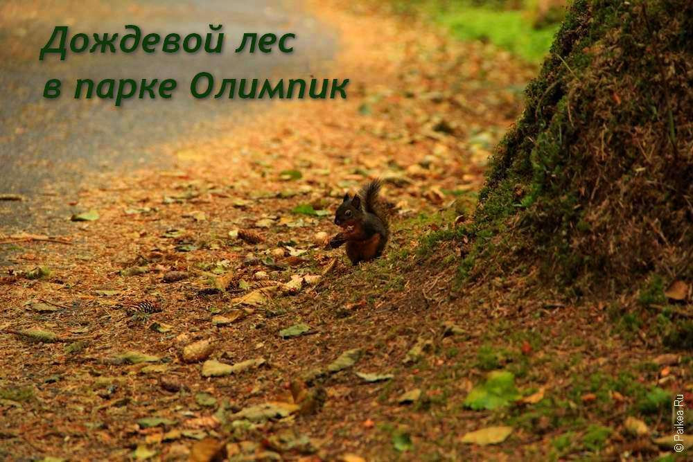 Белка в лесу в парке Олимпик