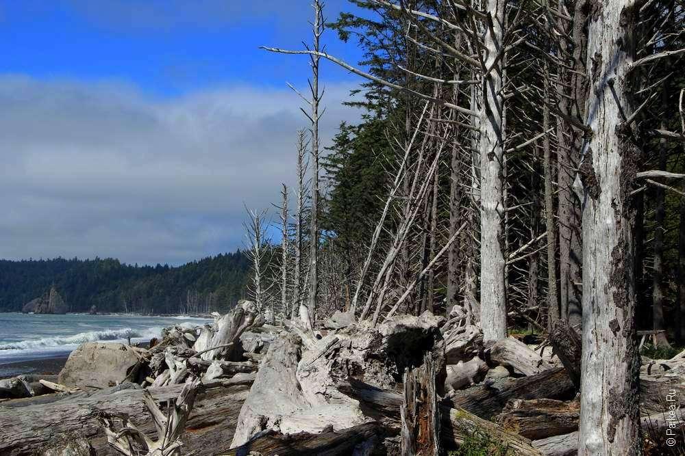 Сгоревший лес на берегу