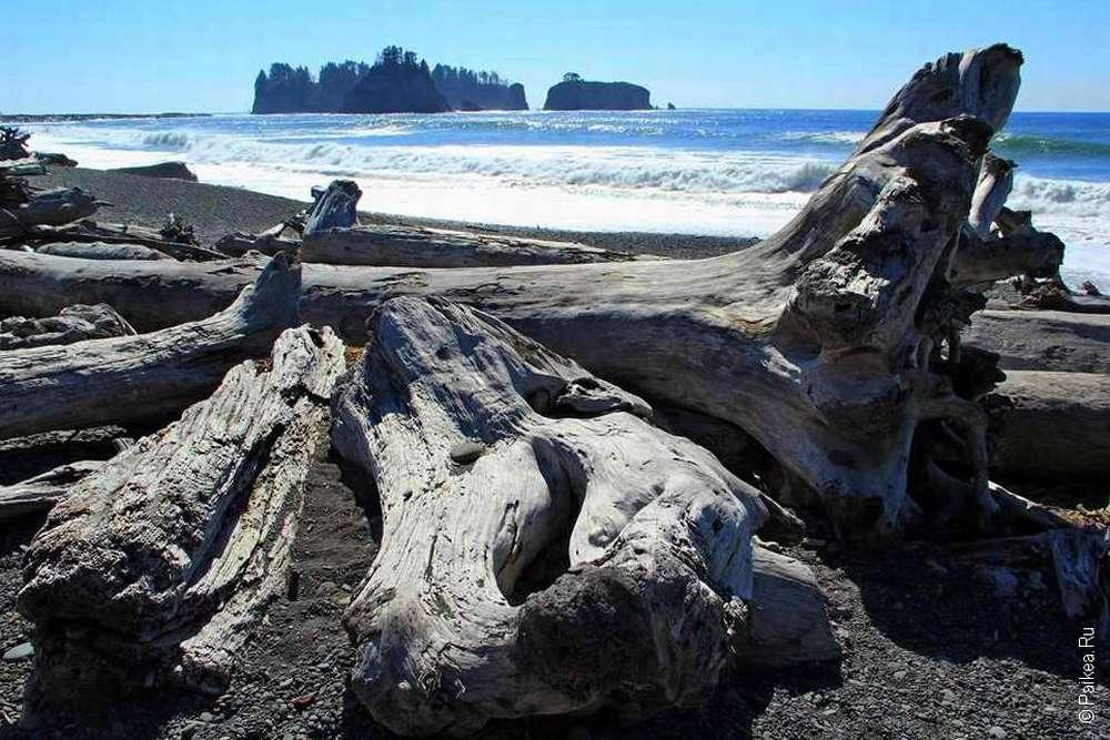 Павшие деревья на пляже Риалто