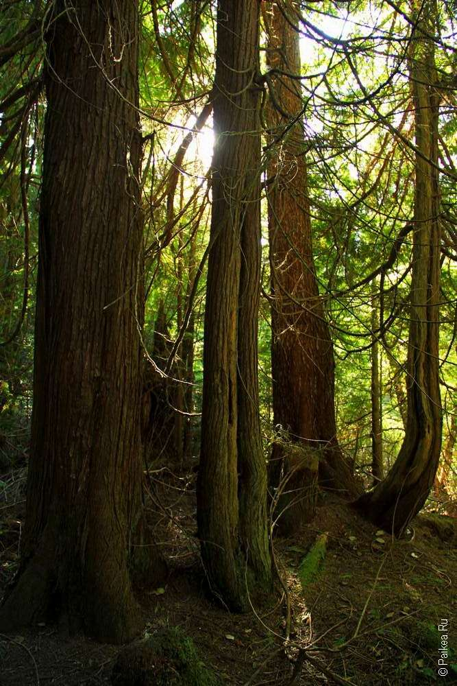 Лесной массив в парке Олимпик