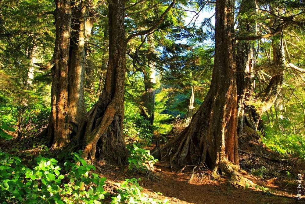 Лес в нацпарке Олимпик