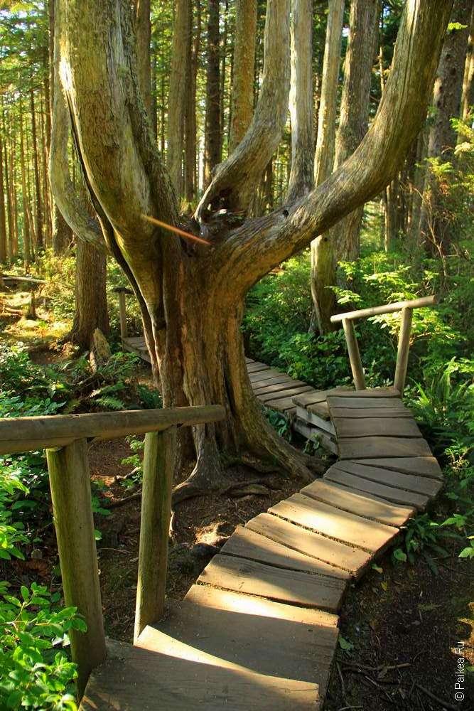 Деревянная тропа в парке Cape Flattery